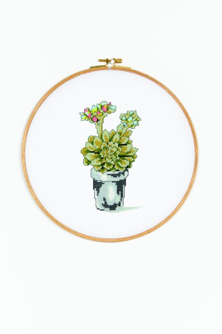 Flowering Succulent  pattern